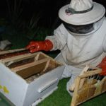 bee removals new home