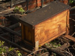 A catch box on top of a pergola