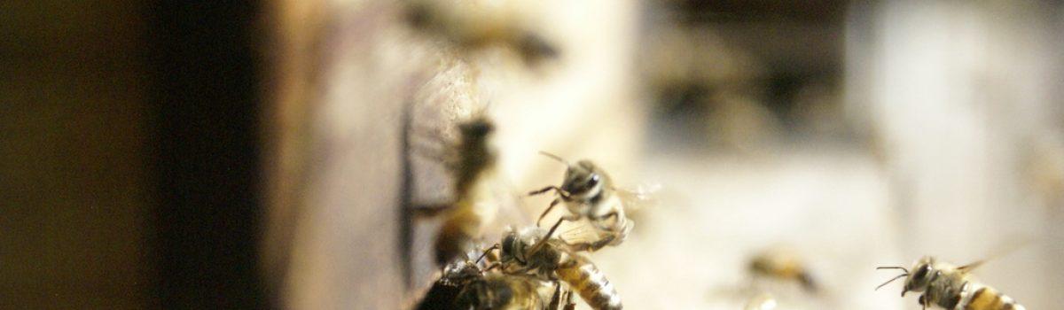 bee photo's