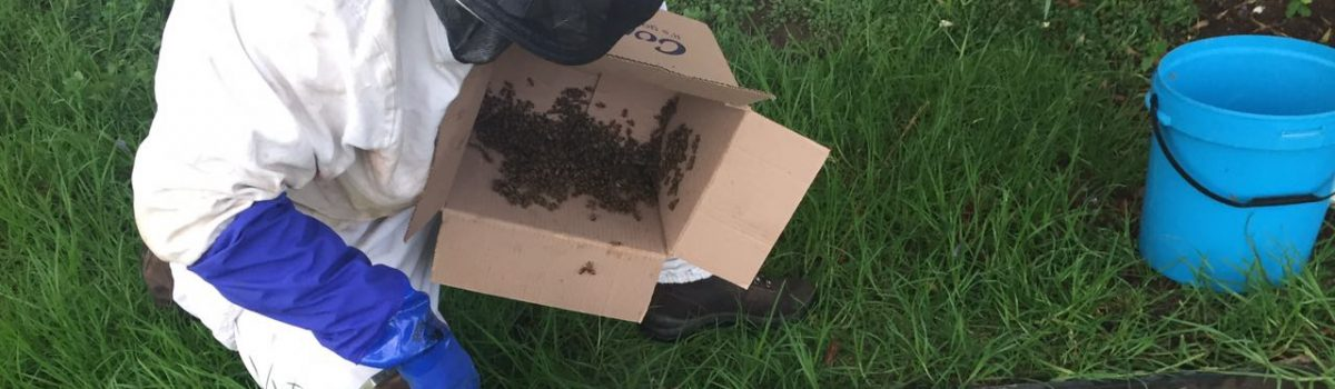why should I have to pay for bee removals