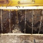pay bee removals